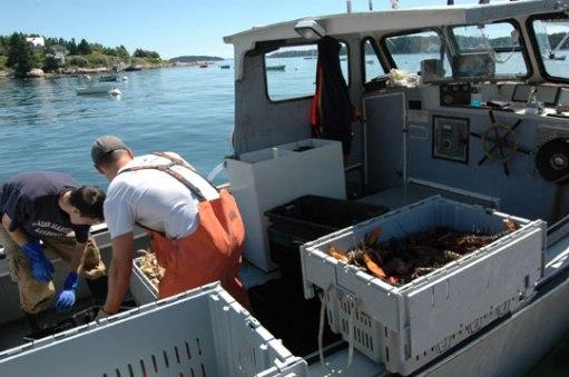 111209-lobster
