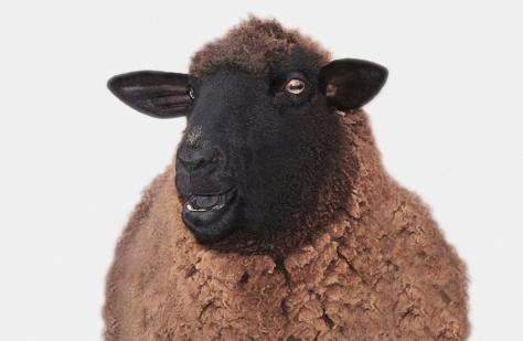 sheep-marquee-home.jpg